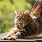 ストレッチ猫