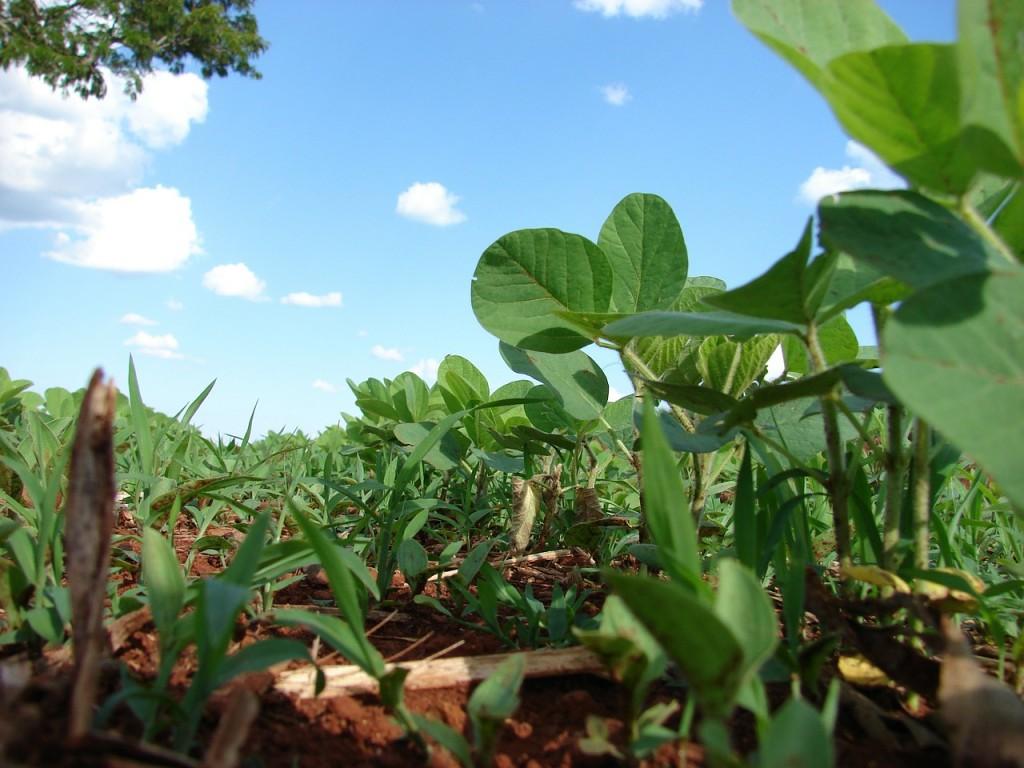 畑の肉 大豆