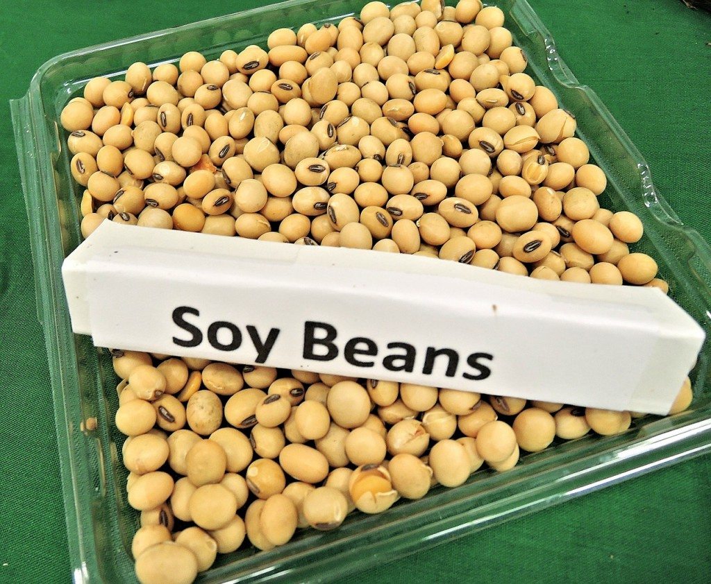 soy-beans-968986_1280