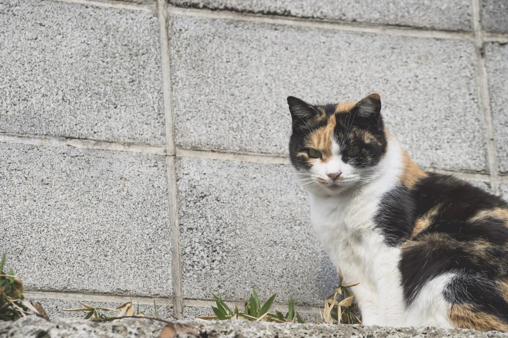 猫背な猫とコンクリート
